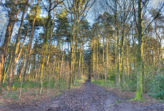 Membership drive launched for Pinewoods Conservation Group