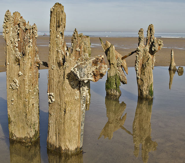 This image of the old groynes at Sandsend won the projected category for Hazel Shaw
