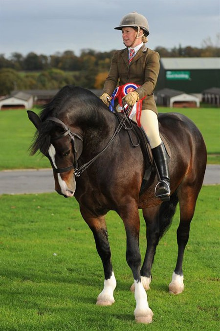 The-Mountain-and-Moorland-Ridden-Champion,-Emma-Boardman-from-Preston-riding-Dyffryngwy-Sir-Picasso-a-Welsh-Section-D-gelding
