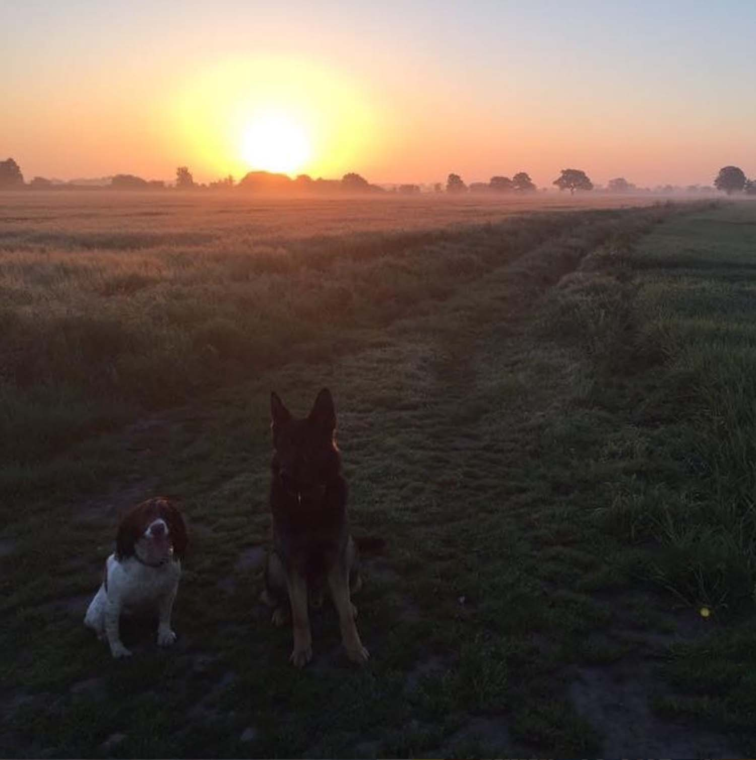 Even PD Dixon and PD Isla like to catch the sunrise on their early morning walks