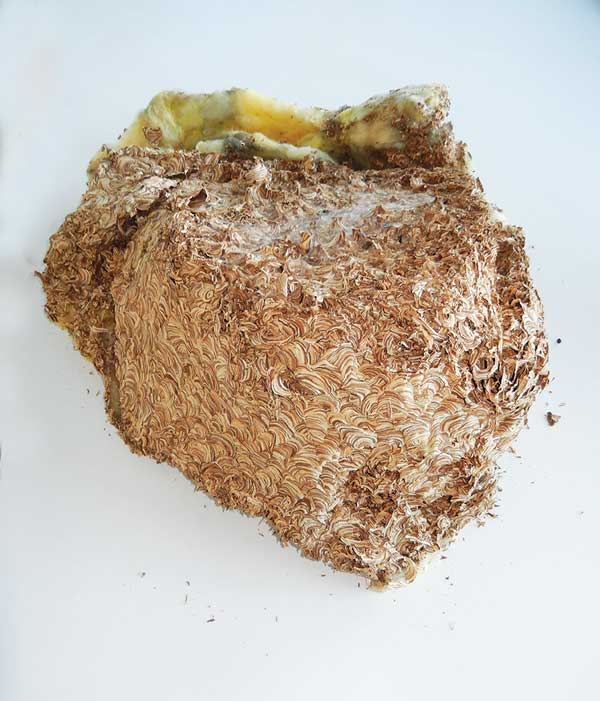 Wasp-nest---top-1