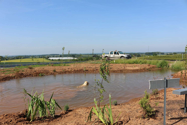 Office Dog Isla taking a swim with views towards Johnsons Cattal nursery site