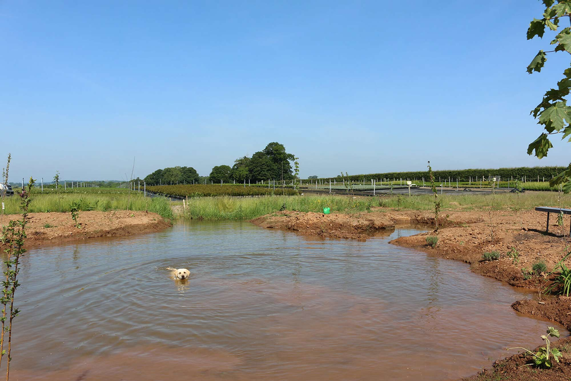 Pond with nursery in the background