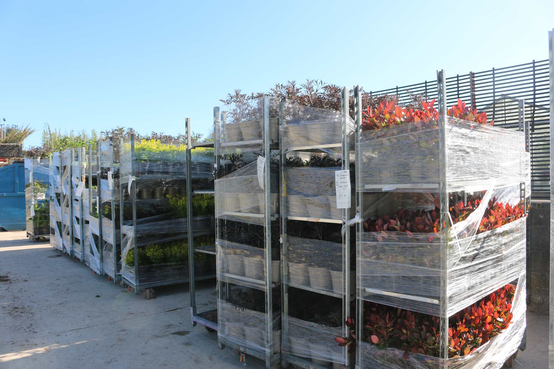 Orders ready for delivery after Plant Health checks - Johnsons of Whixley